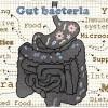 A Balanced and Properly Fed Microbiome   A Key To Elite Health