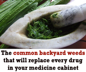 Common backyard weeds will replace every drug in your medicine cabinet